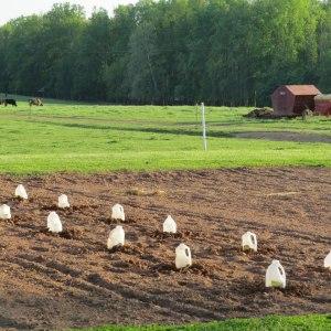 Garden-Milk Jugs